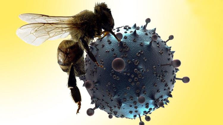 زهر زنبور عسل حاوی نوعی سم است که میتواند تومورها و HIV را از بین ببرد