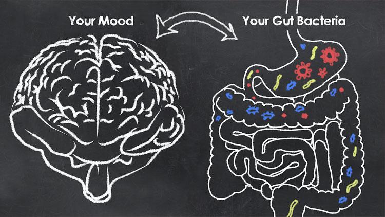 رابطۀ روده با مغز از دیدگاه مدرسهٔ عالی پزشکی دانشگاه هاروارد